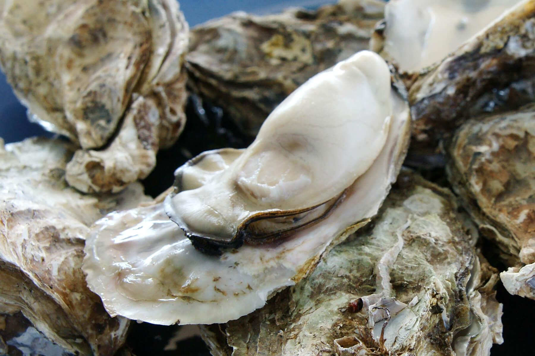 BBQ Oysters with Wild Blueberry BBQ Butter Picture