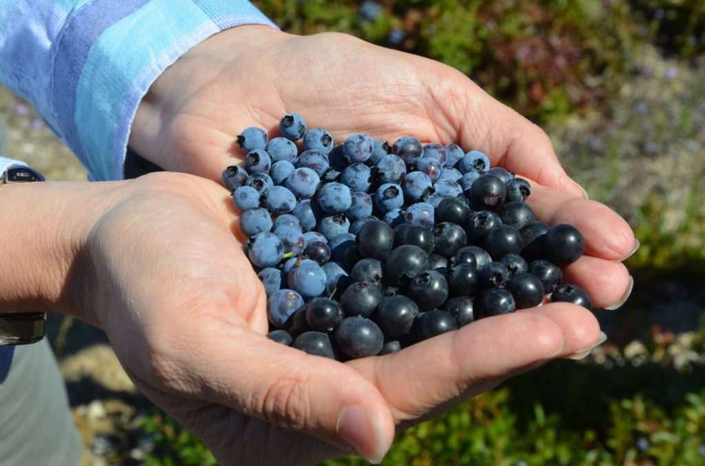 Blueberry Bush Protection